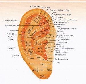 Formation Réflexologie Auriculaire Chinoise Auriculothérapie